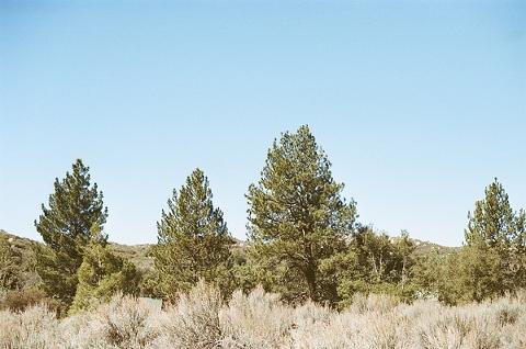 pine valley ca-25