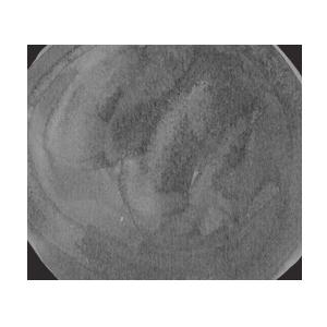 Grace & Salt logo